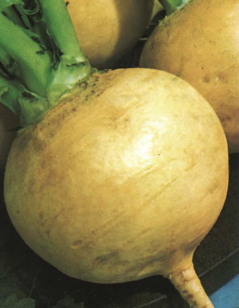 Turnip Golden Ball - creamy yellow to truly orange flesh