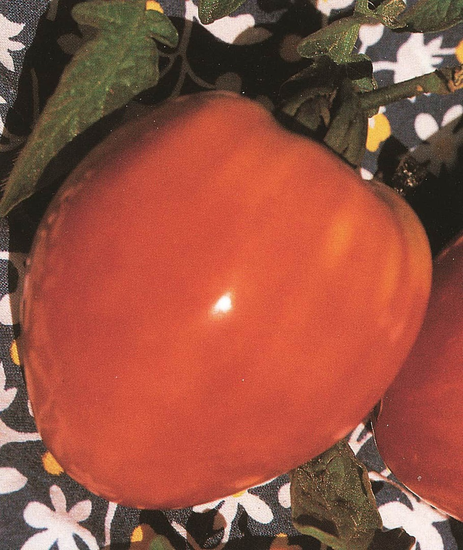 Tomato Oxheart - A heart-shaped pink fruit