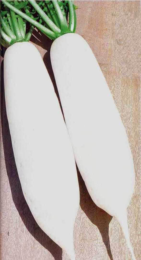 Radish Seol Chun - Pure white large Korean daikon radish