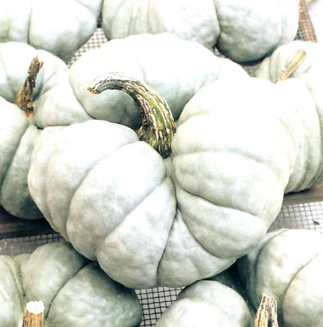 Pumpkin Triamble - thick sweet orange flesh