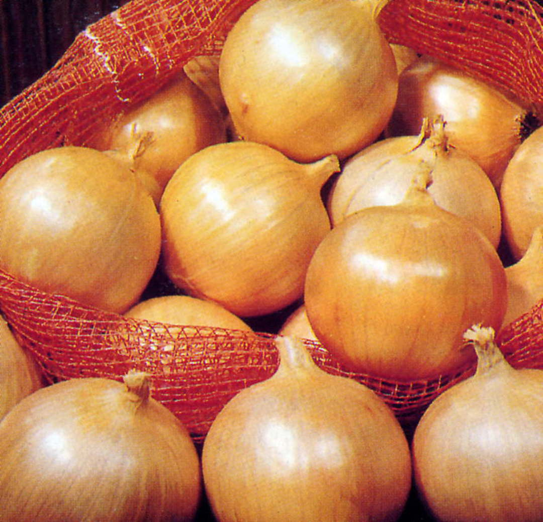 Onion Yellow Sweet Spanish -  large golden-brown skinned onion