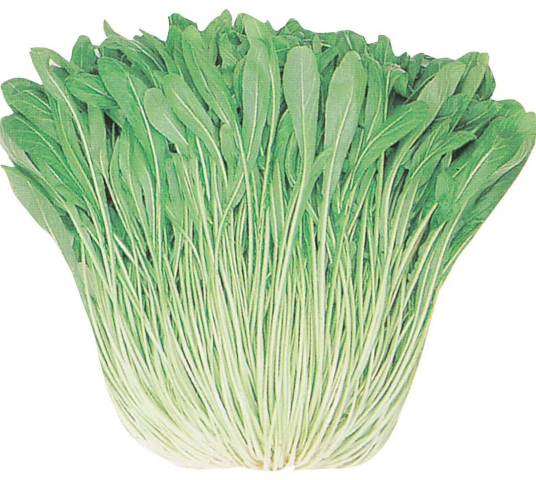 Mibuna Green Spray - Japanese green