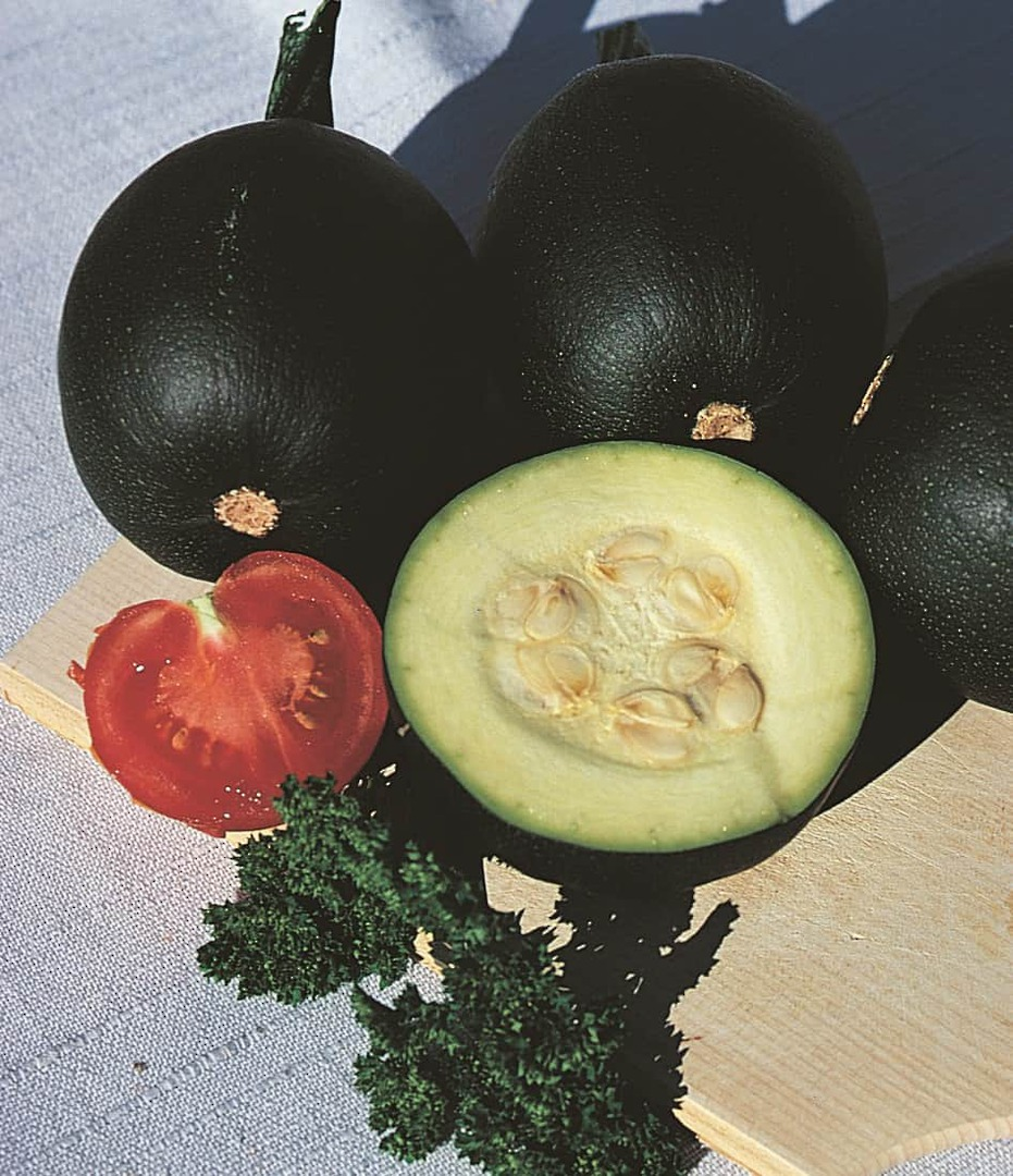 Squash African Gem -  fruits are round, dark green with lots of lighter spot