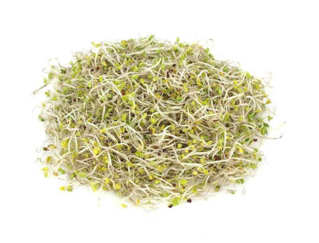 Organic Green Broccoli sprouts