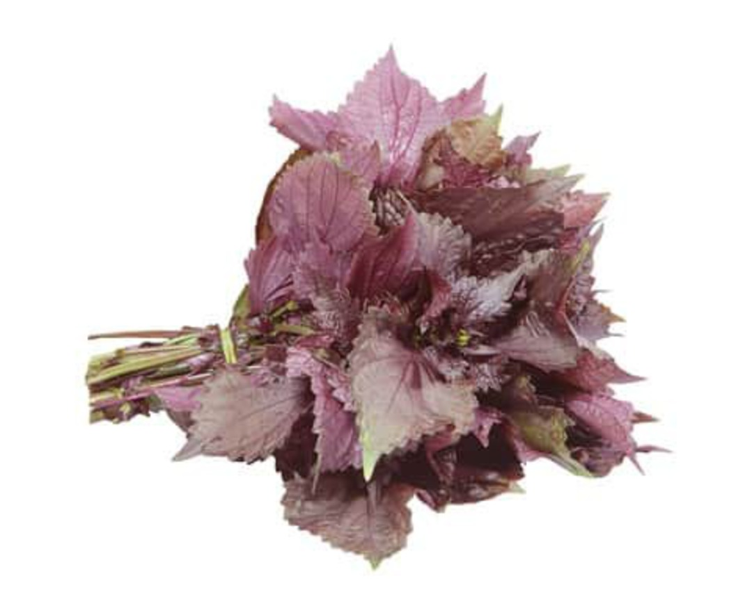 Shiso Purple - bunch of harvested leaves