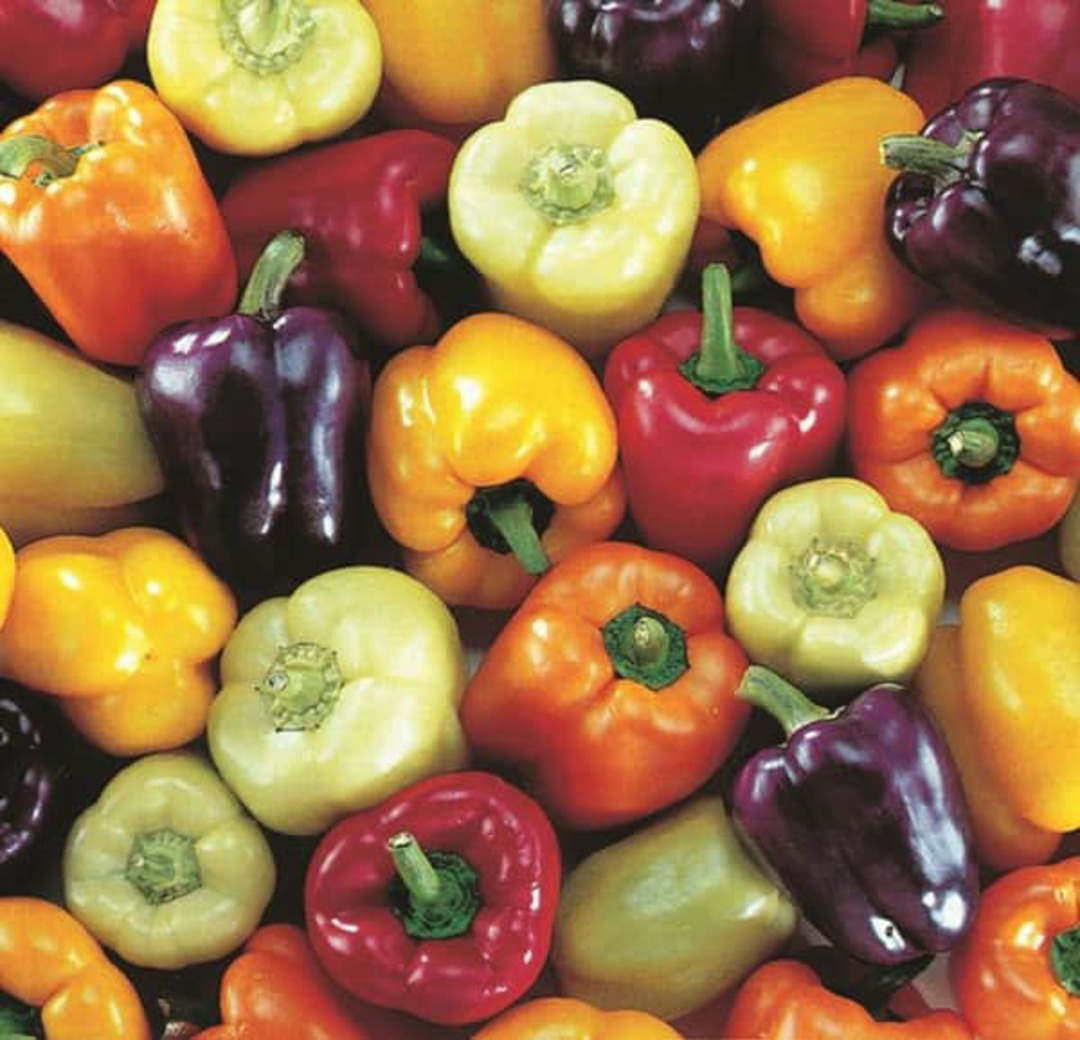 Pepper Bell Colour mix -  lemon, orange, red, purple, golden yellow  and white