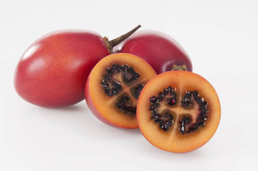 Tamarillo Large Red - red-bronze egg-shaped fruits