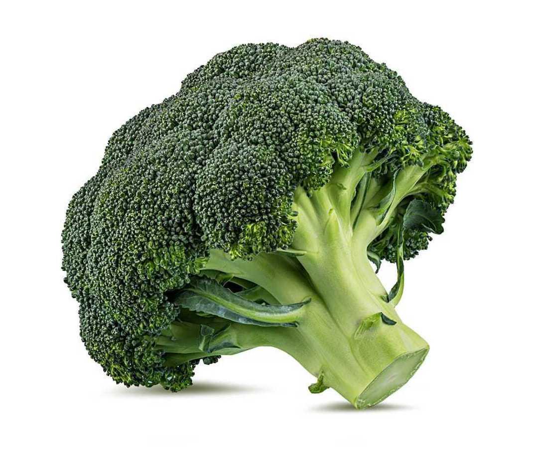 Organic Broccoli Belstar F1 - fine beaded medium green domed head