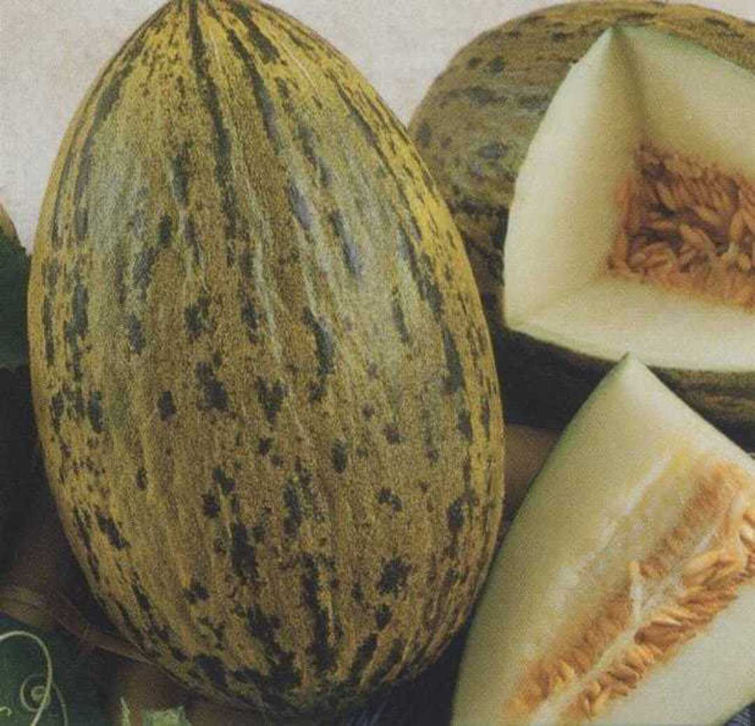 Melon Spanish Whimsy - mottled skin with pale green flesh
