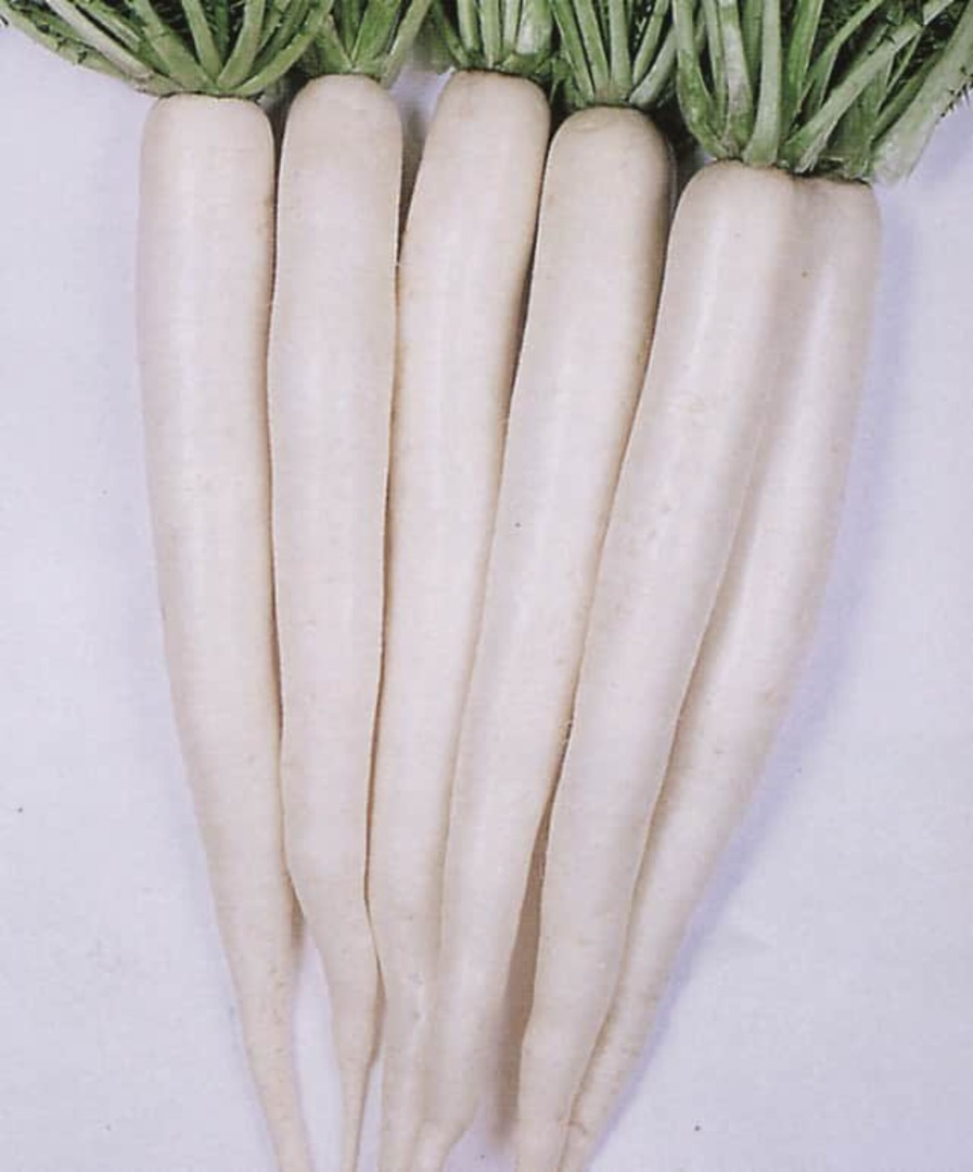 Radish Tokinashi - pure white root 25-35cm long