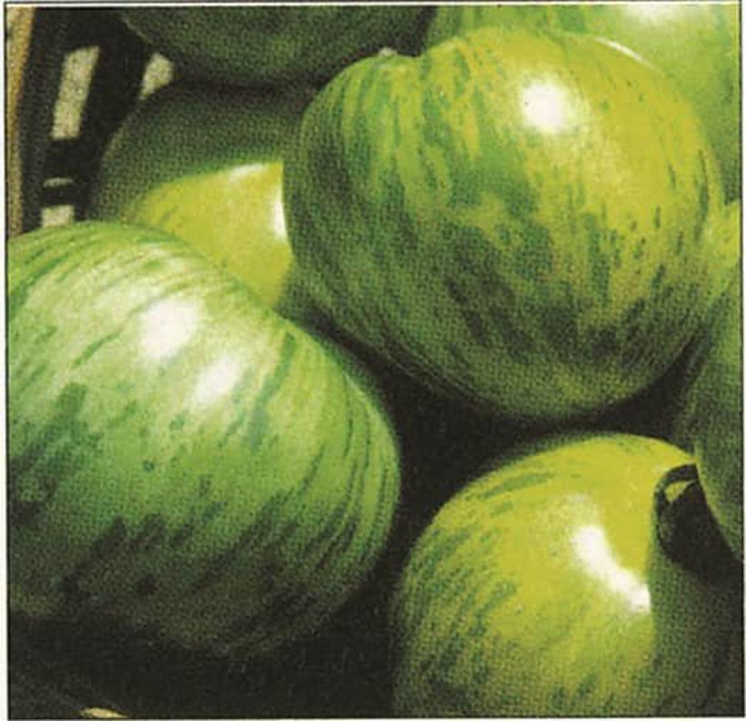 Tomato Green Zebra -  green striped beauty