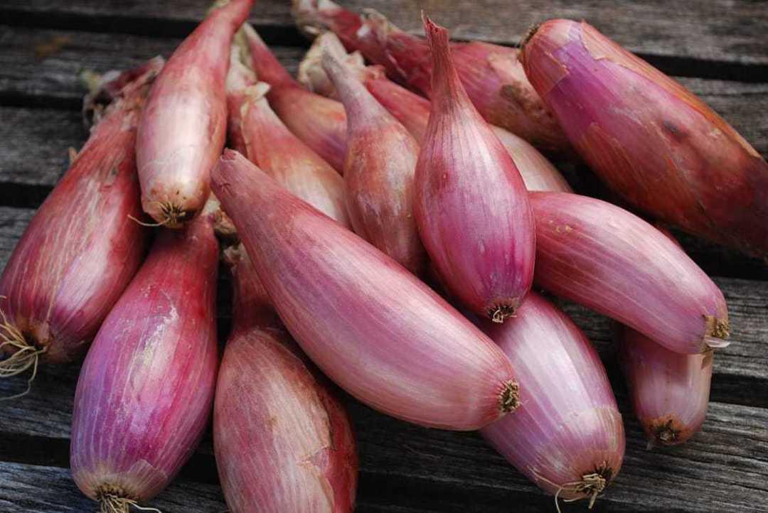 Onion Shallot Zebrune -  banana shallot with pinkish brown bulbs
