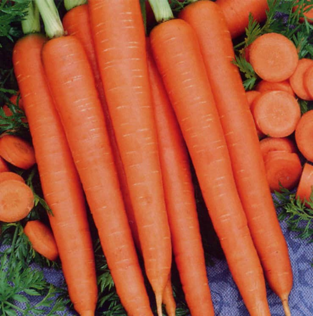 Carrot Samantha F1 - smooth uniform orange carrot harvest