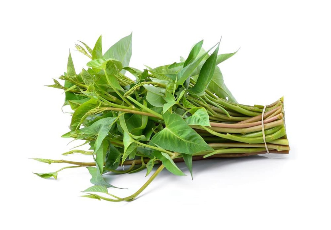 Water Spinach Bamboo Leaf - mid green arrow shaped leaves