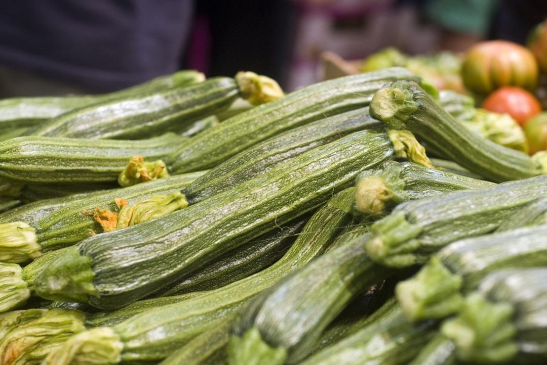 Zucchini Costata Romanesco - green with pale green flecks and ribs