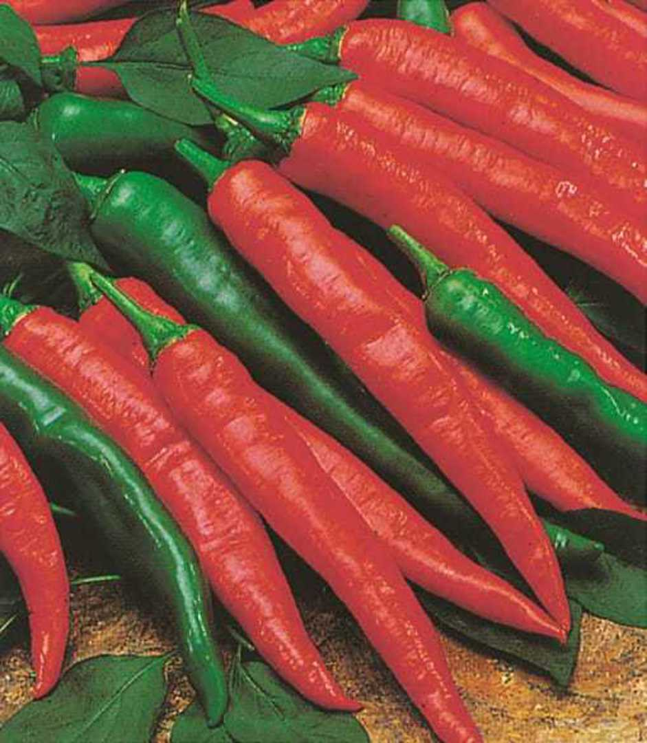 Organic Chilli Cayenne Long Thin - Mixture of long, thin red and green chillis