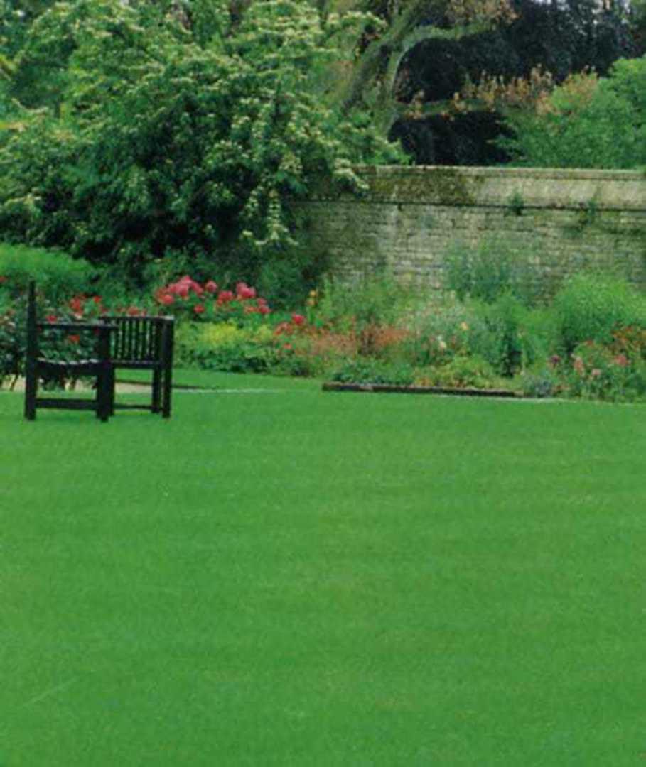 Lawn Grass Premium Fine Blend