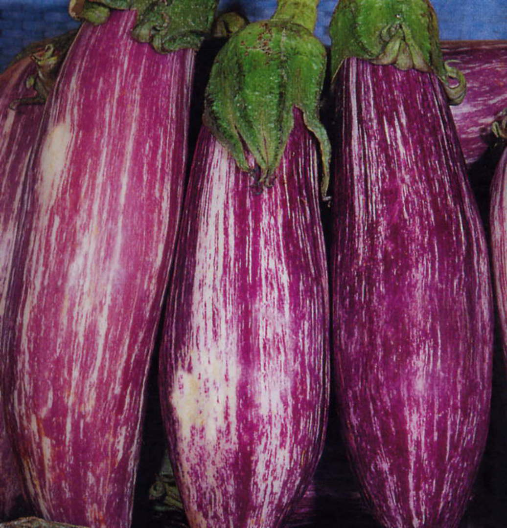 Eggplant Tsakoniki - ong cylindrical fruit have violet white striped thin skin