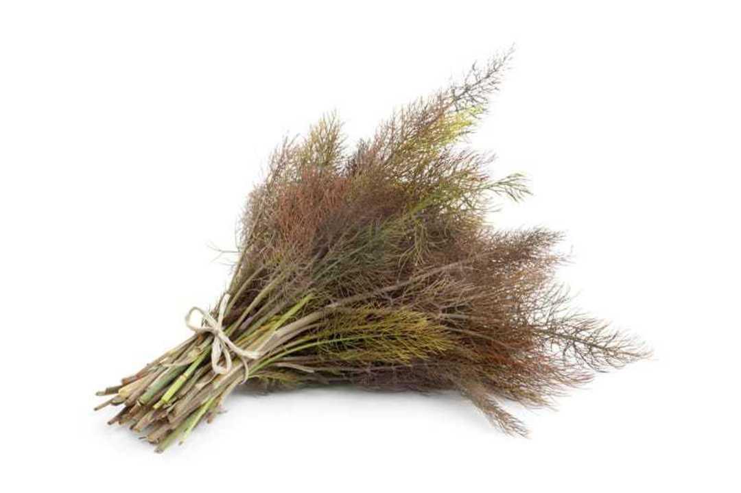 Fennel Bronze Smokey - bronze/green foliage