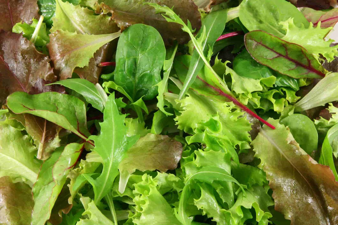 Mesclun Lettuce Mix - colourful blend of reds and greens