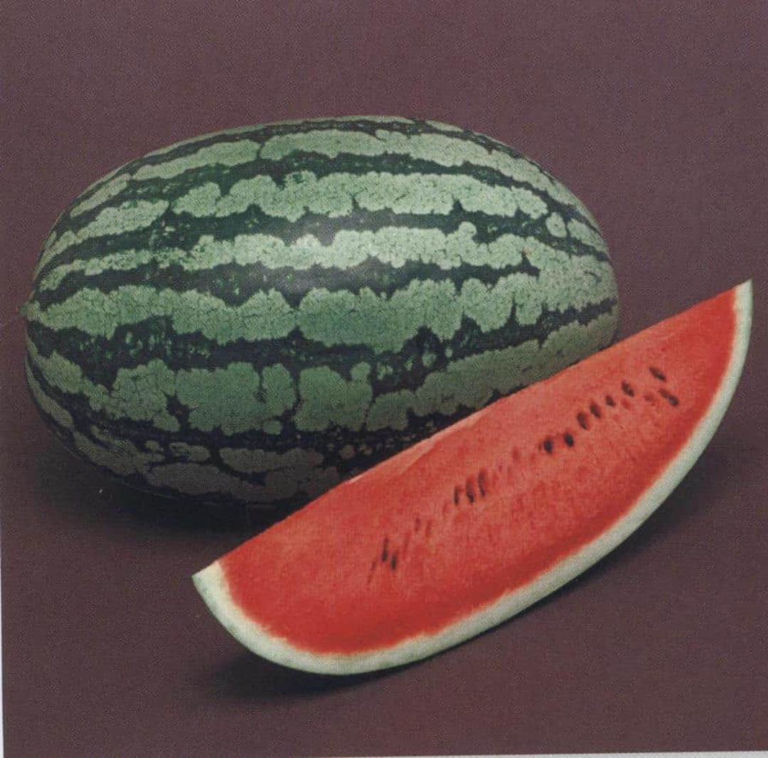 Watermelon Sweet Red F1 - sweet and crisp red flesh watermelon
