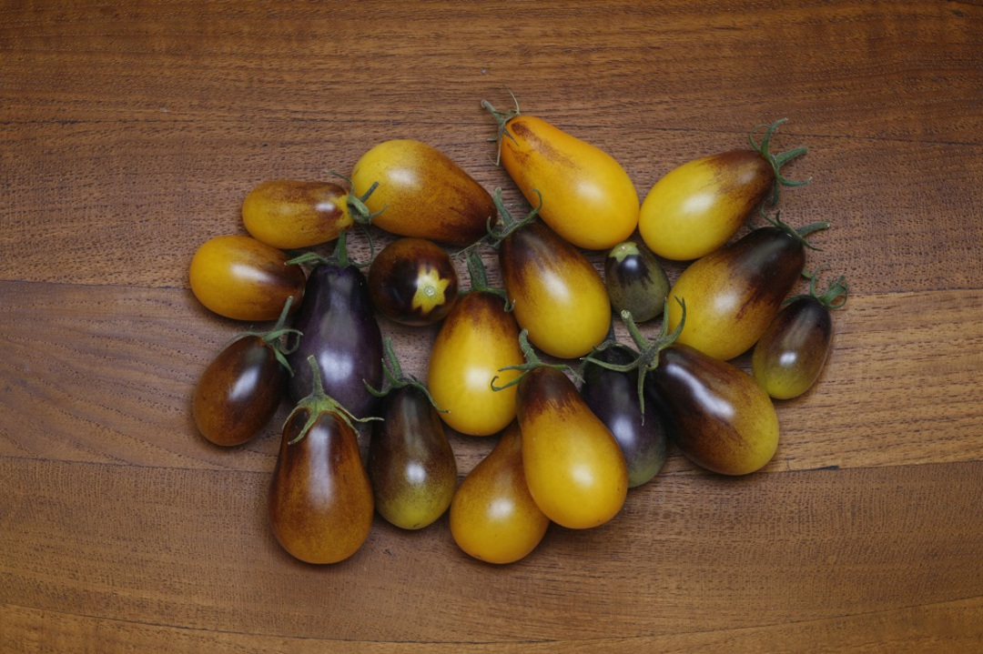 Tomato Indigo Pear Drops image 0