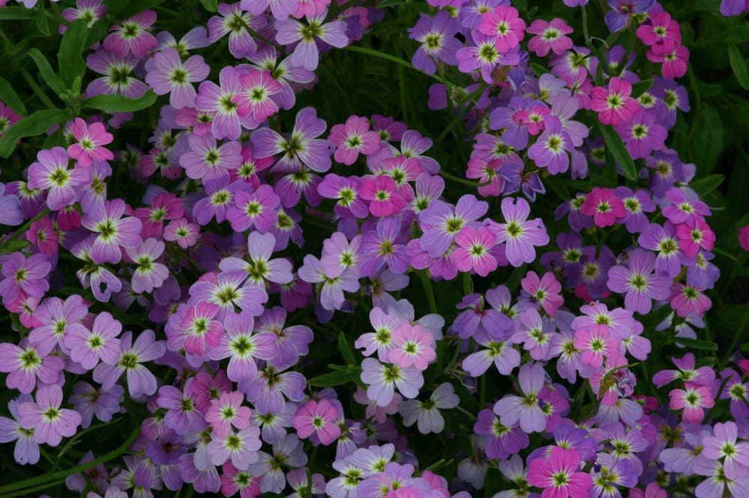 Stock Spring Sparkle image 0