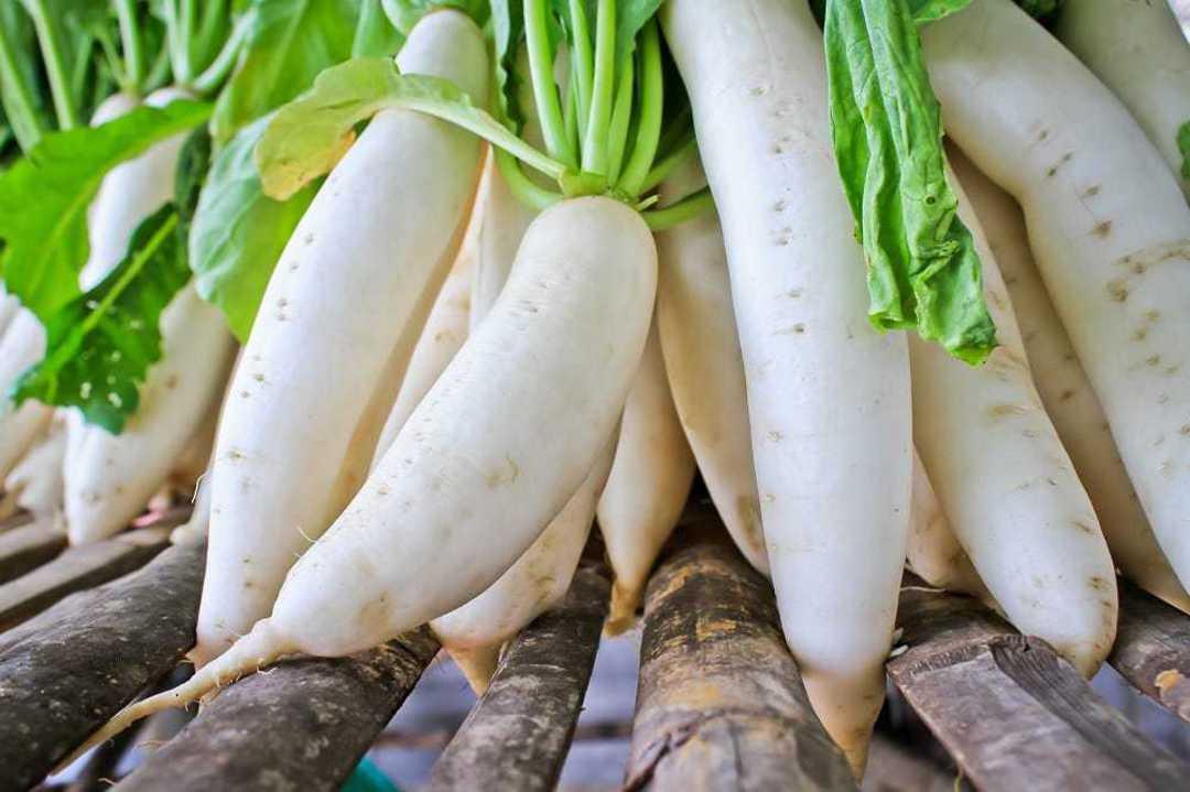 Organic Radish White Daikon - long white Japanese radish