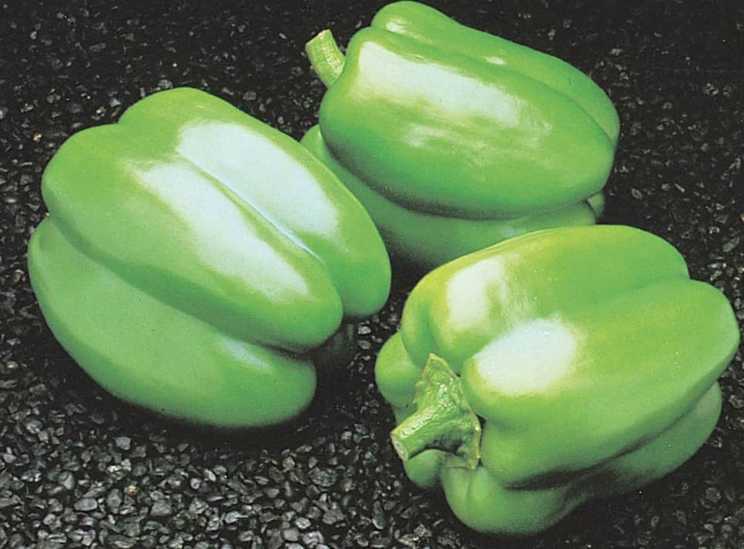 Pepper Californian Wonder - green, thick walled and blocky