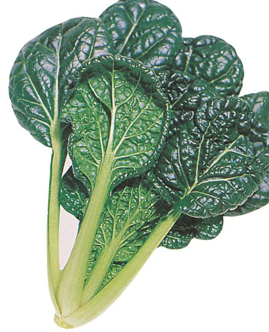 Misome F1 - glossy deep green savoyed leaves