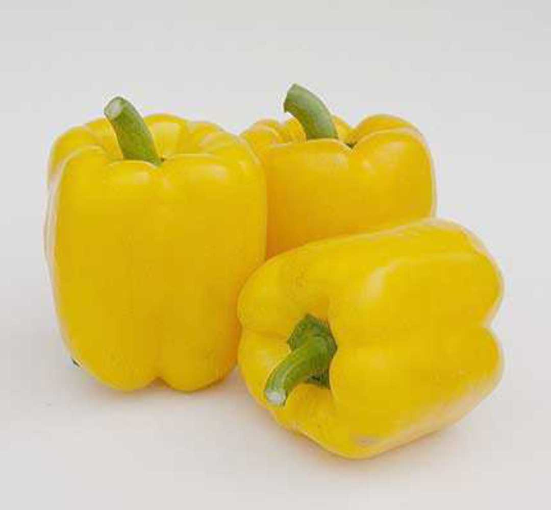 Pepper Golden Bell F1 -  sweet bell pepper ripening to a glossy gold at maturity