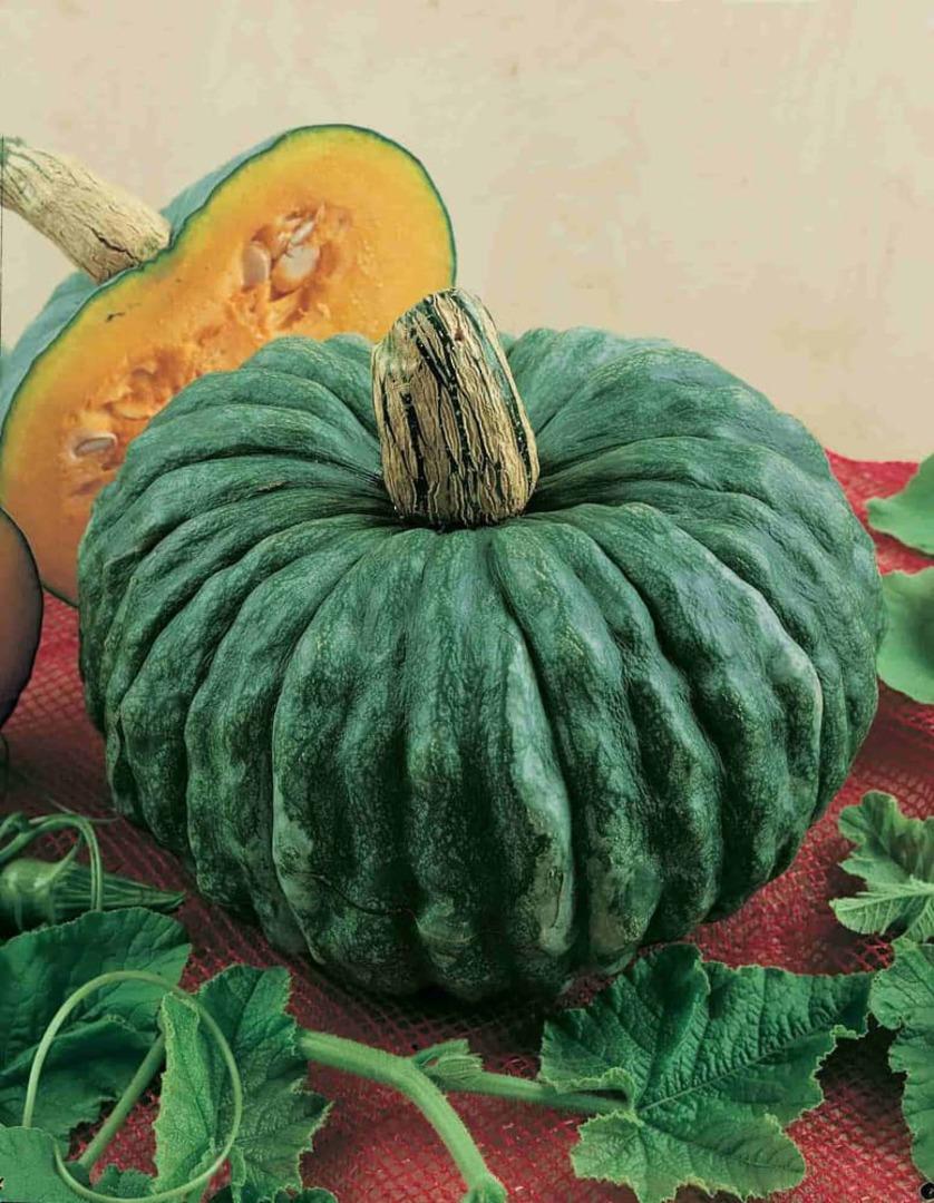 Pumpkin Marina di Chioggia image 0