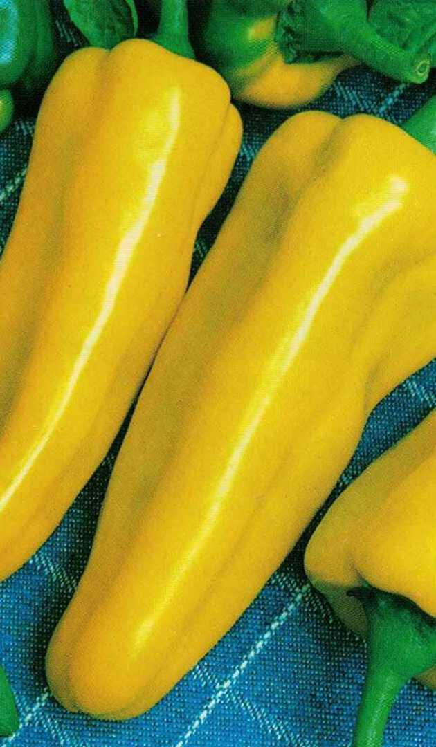 Pepper Marconi Yellow - big and beautiful tapering fruit that are golden yellow