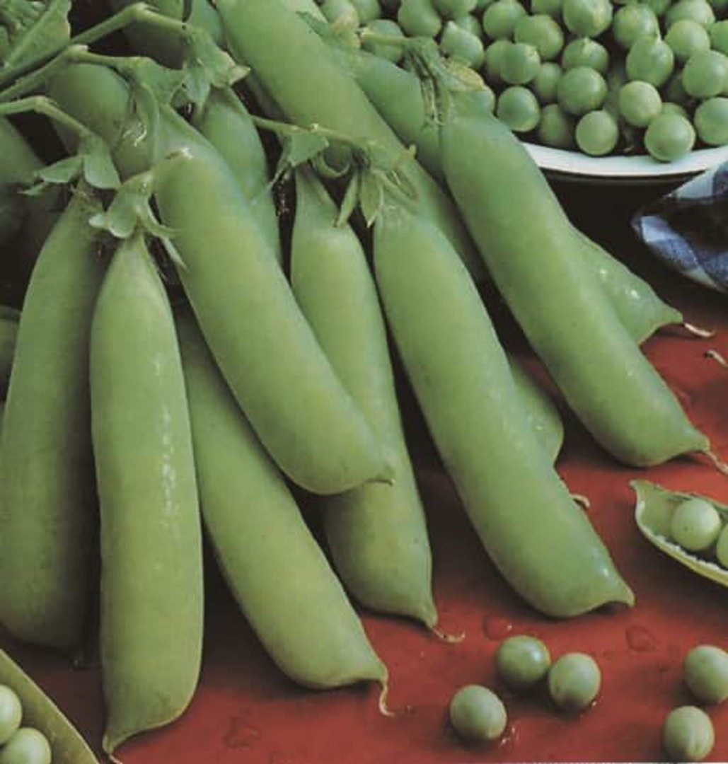 Pea Petit Provencal - small, green, sweet and tender.