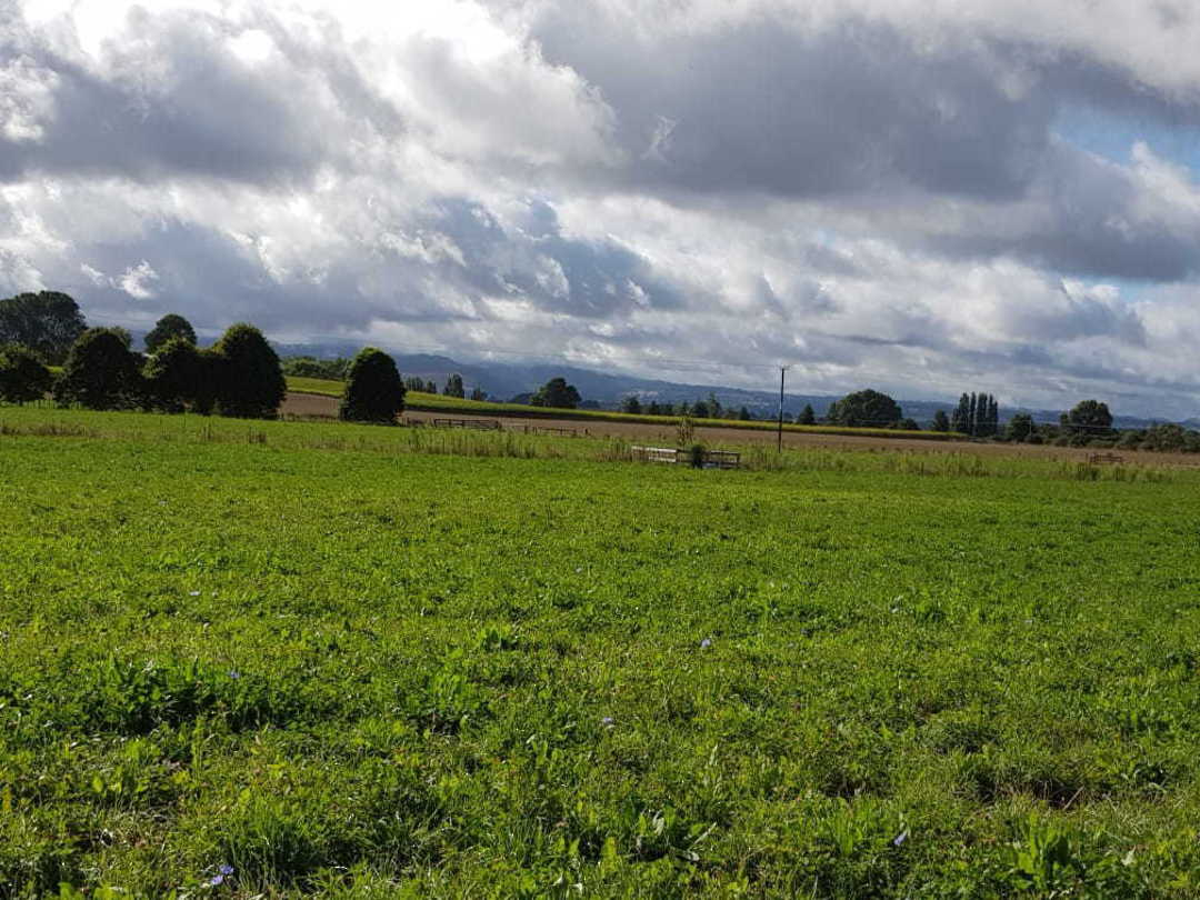 Pasture Drought Hardy Blend