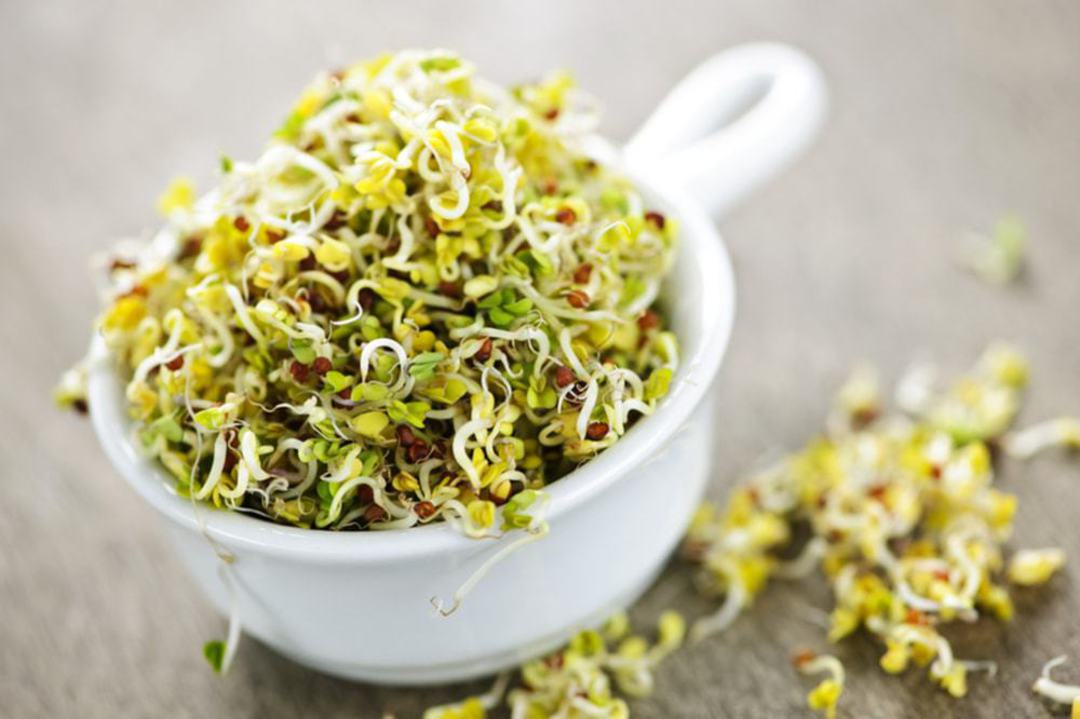 Cup full or sprouts