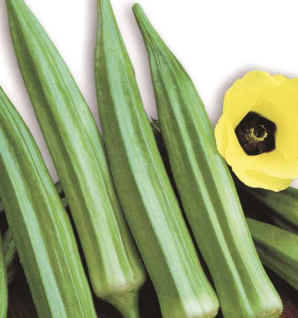 Organic Okra Clemson Spineless - medium green pods