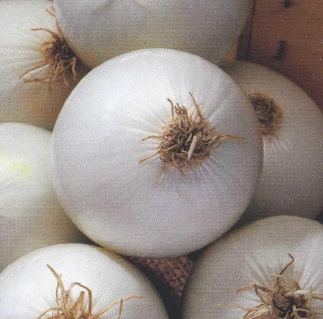 Organic Onion Walla Walla - sweet large white onion