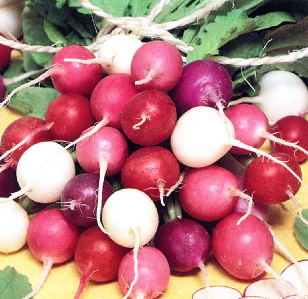Radish Gourmet Blend - 10 varieties including Reds, Pinks, White, Bicolours...