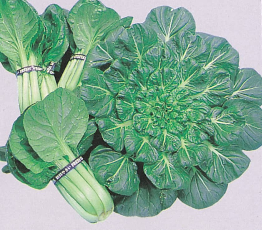 Cabbage Tat Soi - bundled leaves glossy leaves next to plant