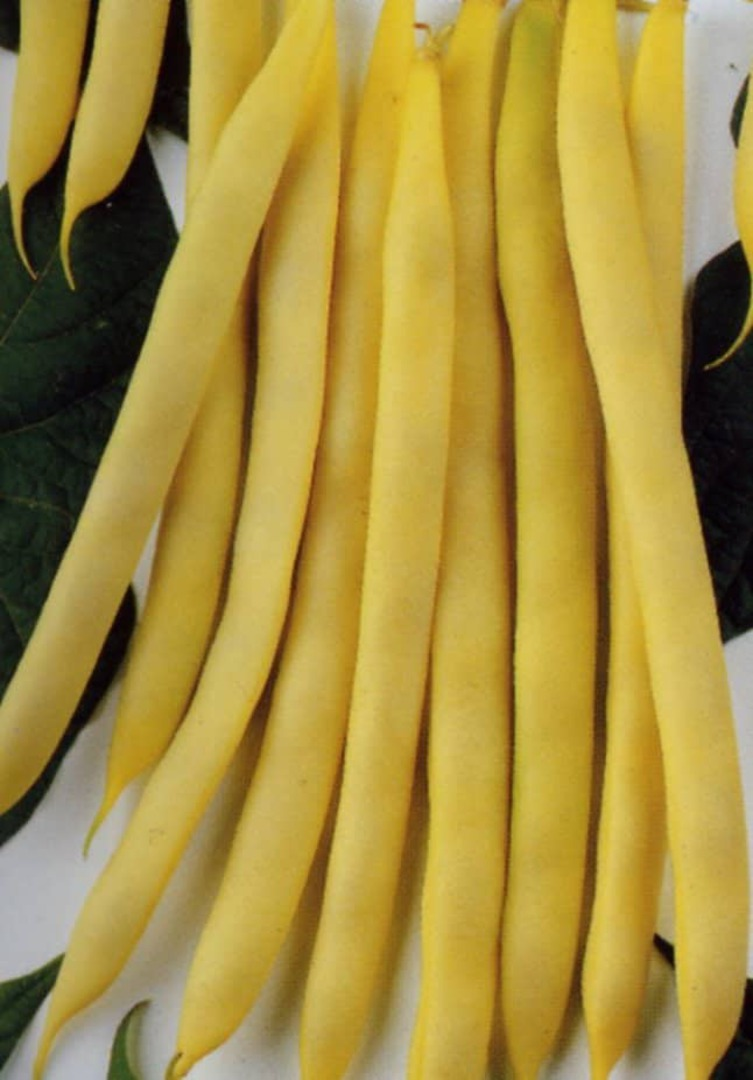 Bean Neekar Golden Runner - Round flat yellow pods