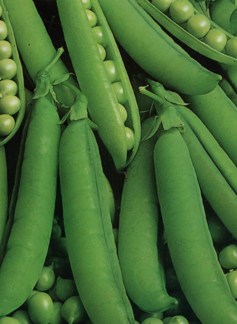 Pea Alderman Tall Climbing - tall variety with dark green pods