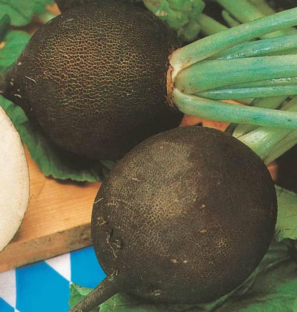 Radish Round Black Spanish -black skin with succulent white flesh