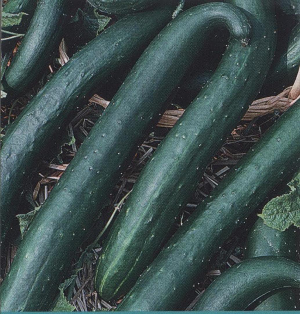 Cucumber Green Dragon - Long dark green fruit