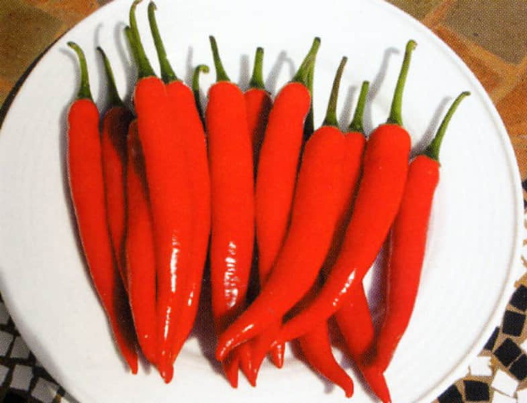 Chilli Sky Hot F1 - harvest of long red chillis on plate