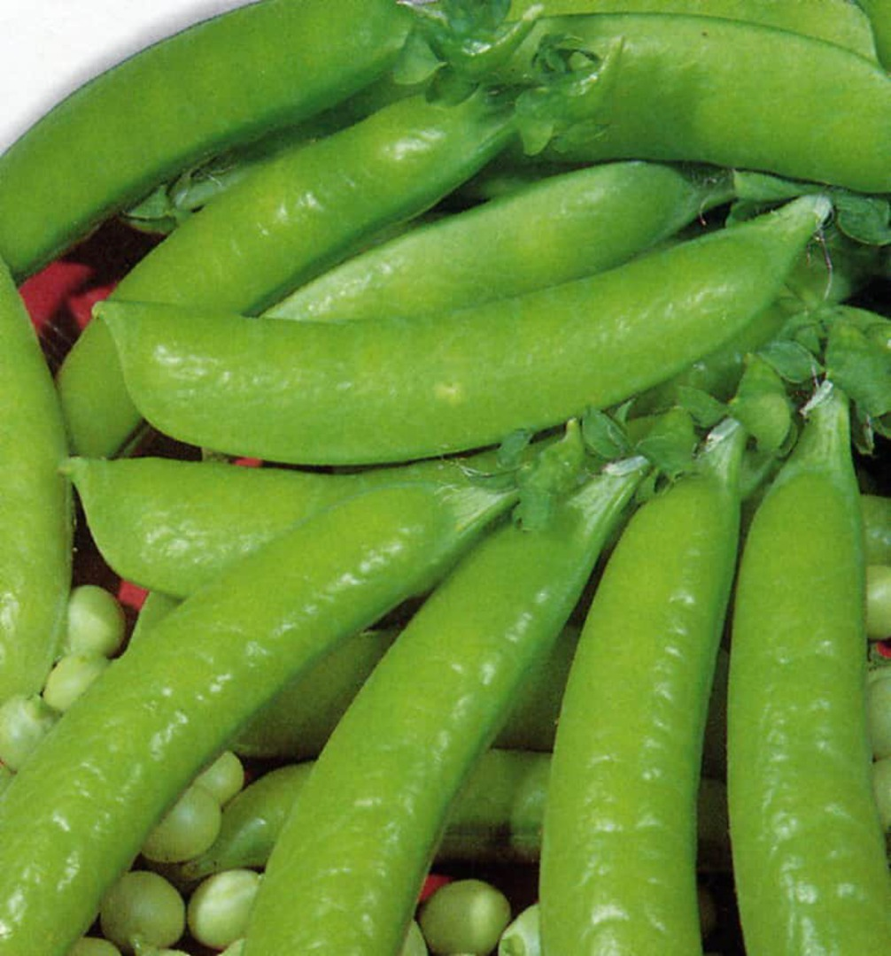 Pea Sugar Snap Dwarf  -  crisp dark green pods