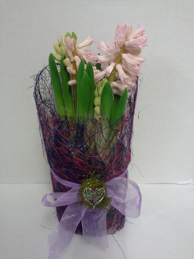 Perfumed Hyacinth image 0