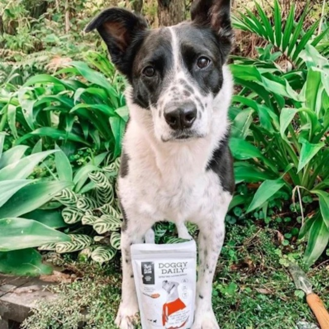 Olive's Kitchen Doggy Daily Superfood Nutritional Boost, 150g or 700g image 3