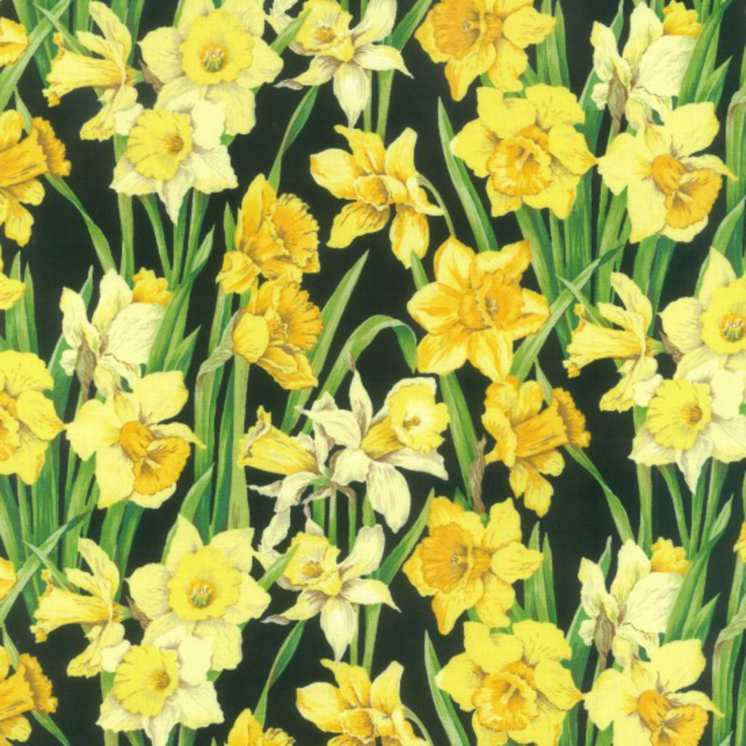 Daffodils for Spring image 0