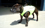 Hunter in his Lime Dog Buoyancy Vest - Seventhwave Wetsuits Custom-Fit